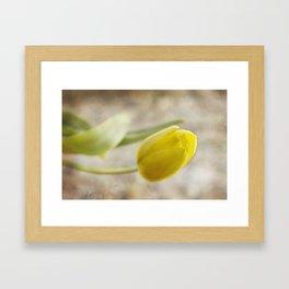Yellow charm Framed Art Print