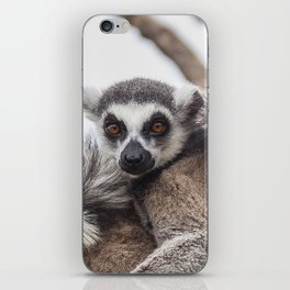 Lemur catta animals iPhone Skin
