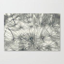 Dandelion 3 Canvas Print
