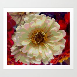 Cream zinnia Art Print