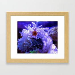 Starfish Coral Reef Ocean Photography Framed Art Print
