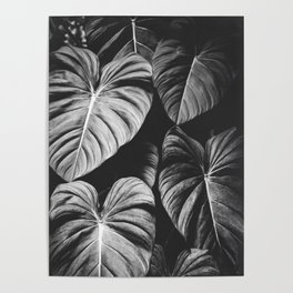 Monstera Black and White Poster