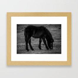Black Pony Framed Art Print