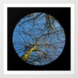 Trees from below 2 Art Print