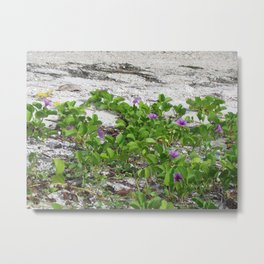 Railroad Vine on the beach Metal Print