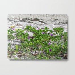 Railroad Vine on the beach Metal Print