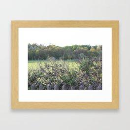 Birds in a tree.  Framed Art Print