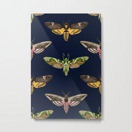 Hawk Moths I Metal Print