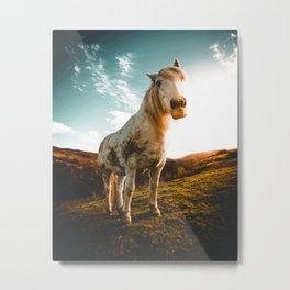 Horse (Color) Metal Print