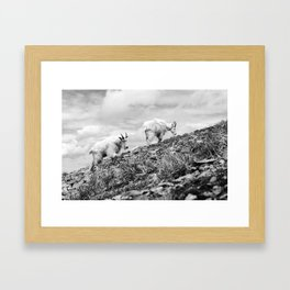 MOUNTAIN GOATS // 4 Framed Art Print