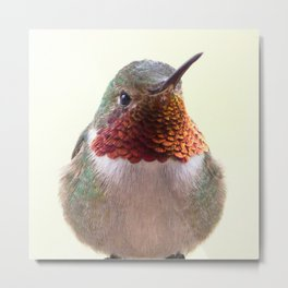 Watercolor Bird, Broad-Tailed Hummingbird 01, Estes Park, Colorado, Estes Park Beauty Metal Print