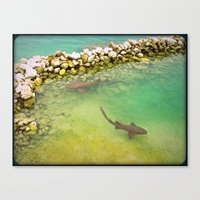 sharks Canvas Prints featuring Sharks by FortuneArt&Photography