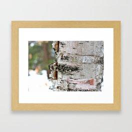 Peeling Birch Framed Art Print