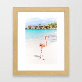Flamingo Beach, Aruba Framed Art Print