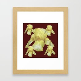 PALE YELLOW IRIS ON BURGUNDY COLOR Framed Art Print