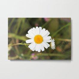 White Wildflower Metal Print