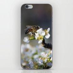 Cute Bee iPhone & iPod Skin