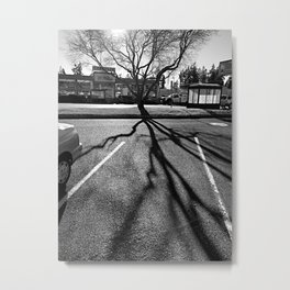 Shadow Tree - Pacific Northwest Metal Print