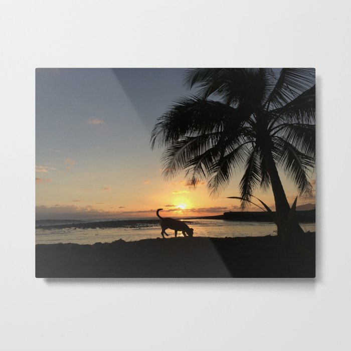 Sniffing Dog in the Costa Rican Sunset Metal Print