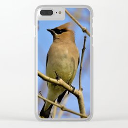 Cedar Waxwing Bird (2) by Reay of Light Clear iPhone Case