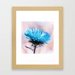Knapweed blue 221 Framed Art Print
