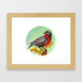 Loica bird Framed Art Print