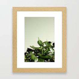 JADE PLANT II Framed Art Print
