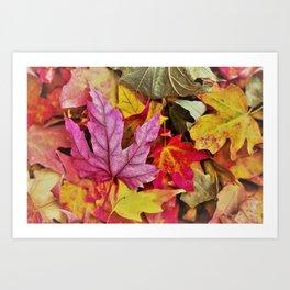Autumn colorful leaves mountain Art Print