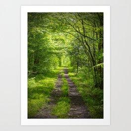 Trail Through Green Woods Art Print