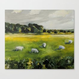Irish Sheep Canvas Print