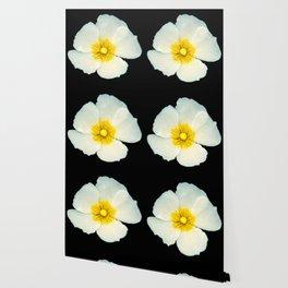 white dune flower Wallpaper