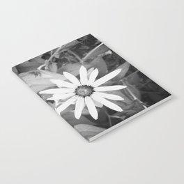 Black-eyed Susan 1 Black and White jjhelene Notebook