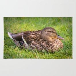 Female Mallard Duck Rug