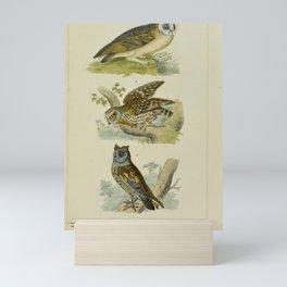 014 strix flammea surnia passerina scops aldrovandi17 Mini Art Print