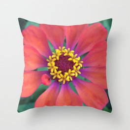 Red Zinnia Purple Yellow Center Bloom Throw Pillow