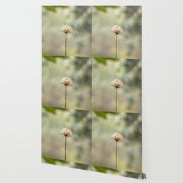 Deadly dandelion Wallpaper