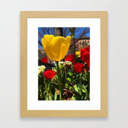 Yellow Tulip Original Photograph Framed Art Print