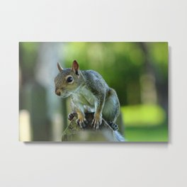 Squirrel on a Fence Metal Print