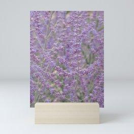 Lavender Field in Brussels Belgium Mini Art Print