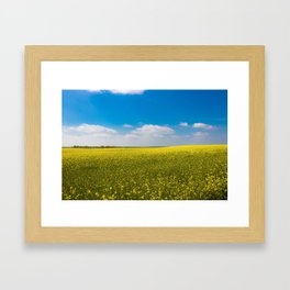 Drifting Days - Blissful Spring Day of Blue Skies and Yellow Canola Fields Framed Art Print