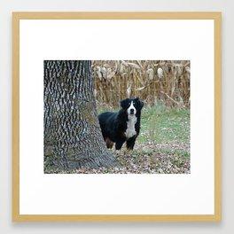 Bernese Moutain Dog Framed Art Print