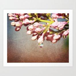 Beautiful Prink Spring Lilacs Art Print