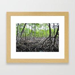 Rain Forest Framed Art Print