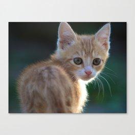 Gatto Rosso - Red Cat Canvas Print