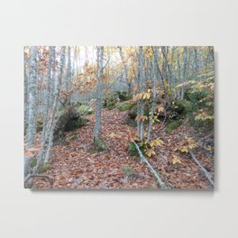 Chestnut Forest in the Fall Metal Print