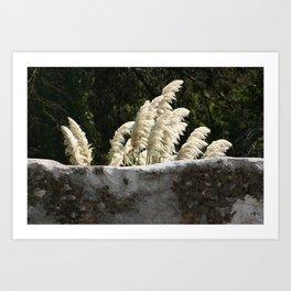Flowering Pampas Grass Plumes Art Print