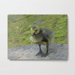 Little Gosling Metal Print