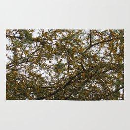 Acacia Golden Mimosa Rug