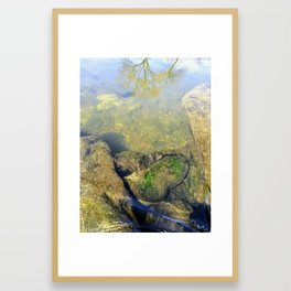 Algae Covered Rock Framed Art Print