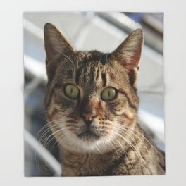Beautiful Eyed Tabby Cat  Throw Blanket